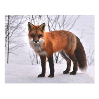 Cartão Postal Fox