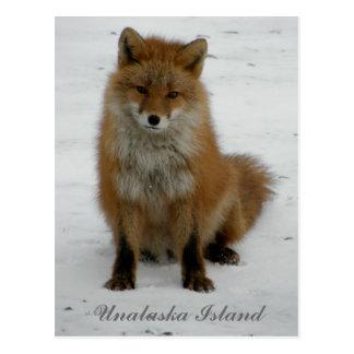 Cartão Postal Fox Aleutian no inverno, ilha de Unalaska