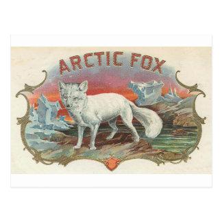 Cartão Postal Fox ártico do vintage
