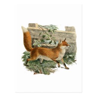 Cartão Postal Fox por uma cerca