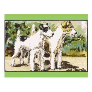 Cartão Postal Fox Terrier