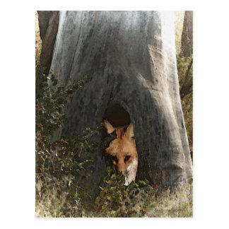 Cartão Postal Fox vermelho em presentes e em roupa de uma árvore