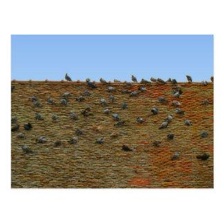 Cartão Postal France, Jura, Arbois, pombos no telhado