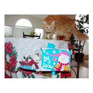 Cartão Postal Frank&Leo: Você viu o gato? postctcard