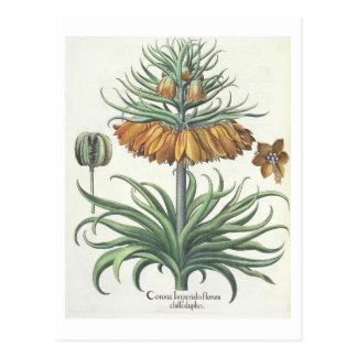 Cartão Postal Fritillary: Classe do florum de Imperialis da