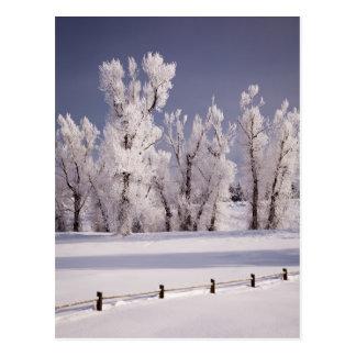 Cartão Postal Frost cobriu árvores e cerca, Colorado