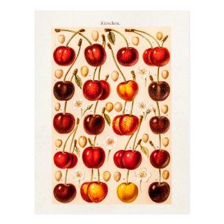 Cartão Postal Fruta antiga das cerejas das variedades da cereja