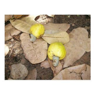 Cartão Postal Frutas do caju, Nigéria
