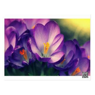 Cartão Postal fundo do primavera