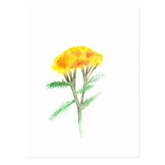Cartão Postal Gaillardia bonito do amarelo da aguarela