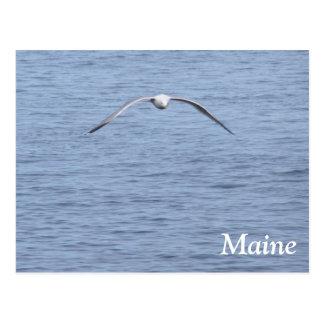 Cartão Postal Gaivota de Maine