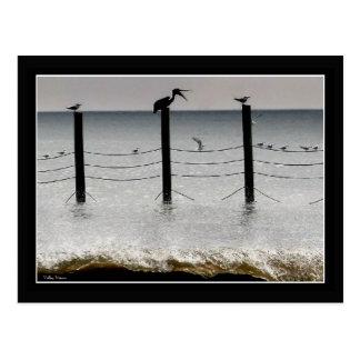 Cartão Postal Gaivota e um pelicano