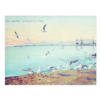Cartão Postal Gaivotas da praia de Cannes