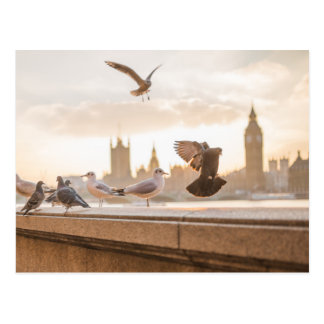 Cartão Postal Gaivotas de Londres