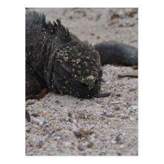 Cartão Postal Galapagos1