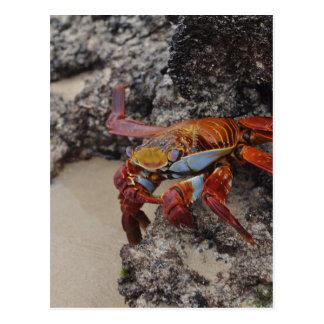 Cartão Postal Galapagos2