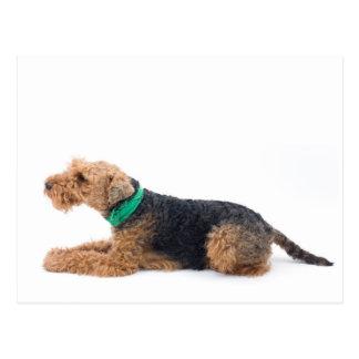 Cartão Postal Galês Terrier