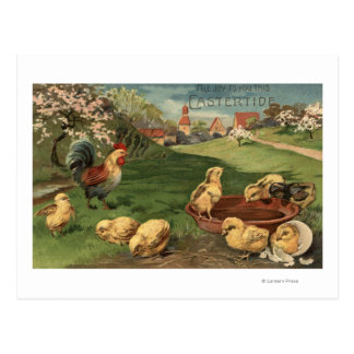 Cartão Postal Galo e pintinhos