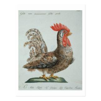 Cartão Postal Galo novo do anão, c.1767-76 (gravura colorida mão