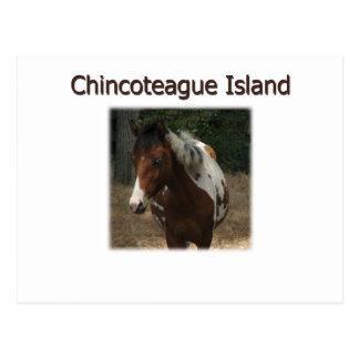 Cartão Postal Garanhão do pônei da ilha de Chincoteague