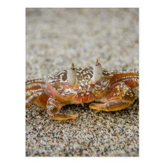 Cartão Postal Garras do caranguejo