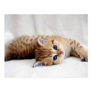 Cartão Postal Gatinho alaranjado bonito do gato malhado com