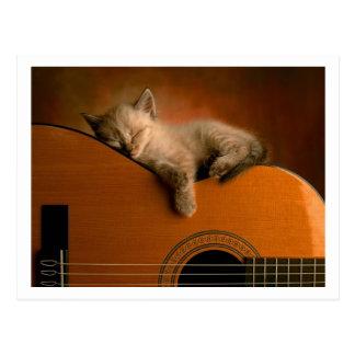Cartão Postal gatinho bonito