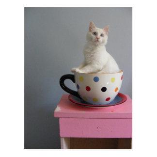 Cartão Postal gatinho bonito no pote da planta