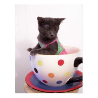 Cartão Postal gatinho dos arys
