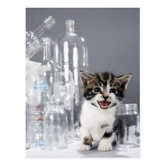 Cartão Postal Gatinho entre garrafas e frascos do reciclado