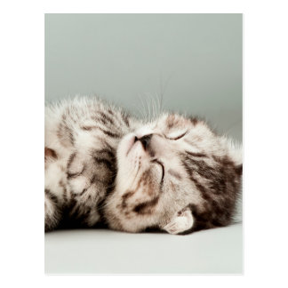 Cartão Postal gatinho, gato, gato de gato malhado bonito, gatos