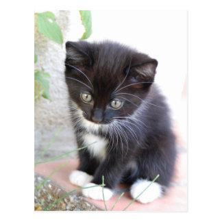 Cartão Postal Gatinho preto e branco