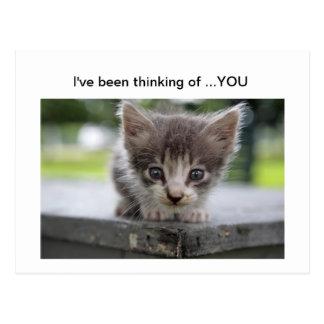Cartão Postal gatinho que pensa de você