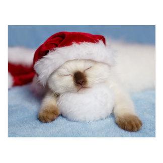 Cartão Postal Gatinho Siamese: Feriado que Napping