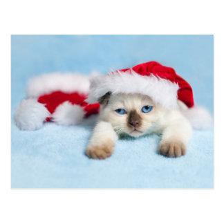 Cartão Postal Gatinho Siamese: Gatinho do Natal