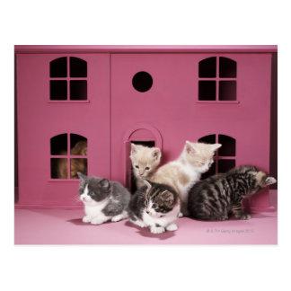 Cartão Postal Gatinhos na casa de boneca
