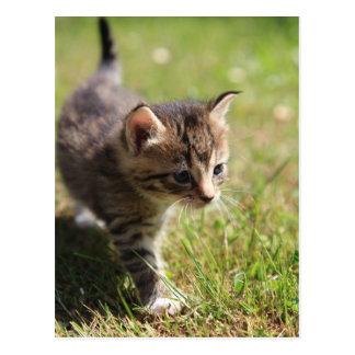 Cartão Postal Gato