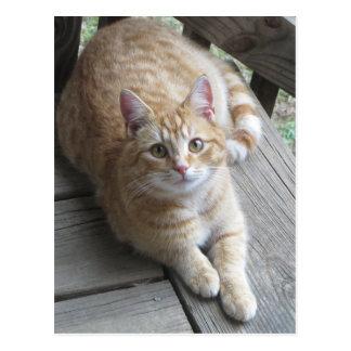 Cartão Postal Gato amarelo