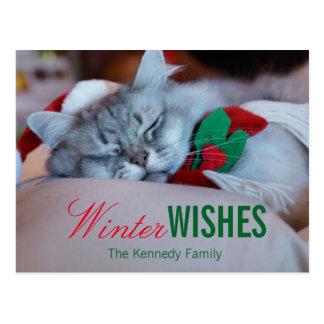 Cartão Postal Gato com chapéu do Natal e lenço, gato do sono