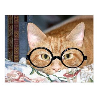 Cartão Postal Gato com vidros e livros