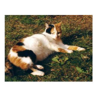 Cartão Postal Gato de chita que encontra-se na grama