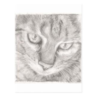 Cartão Postal Gato de gato malhado