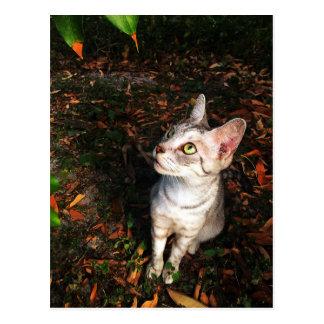 Cartão Postal Gato de gato malhado cinzento