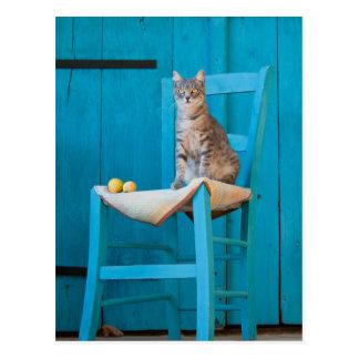 Cartão Postal Gato de gato malhado em uma cadeira azul