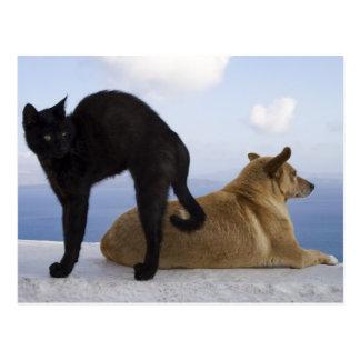 Cartão Postal Gato e cão