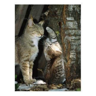 Cartão Postal Gato e gatinho pela árvore