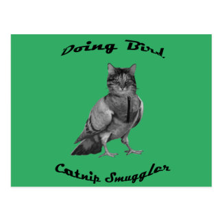 Cartão Postal gato engraçado que faz o pássaro