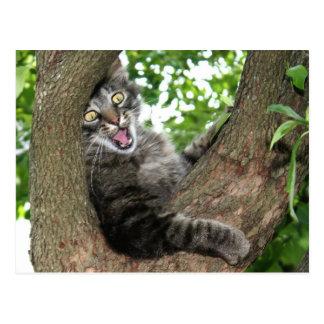Cartão Postal Gato feliz na árvore