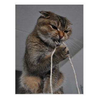 Cartão Postal Gato Flossing