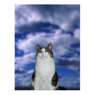Cartão Postal Gato heróico